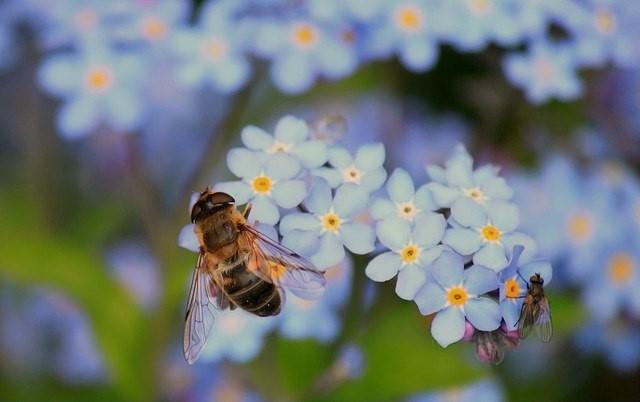 planten-die-bijen-aantrekken